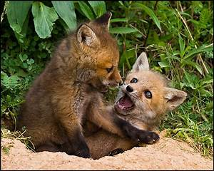 Making Things Visible: Foxes Have Dens..