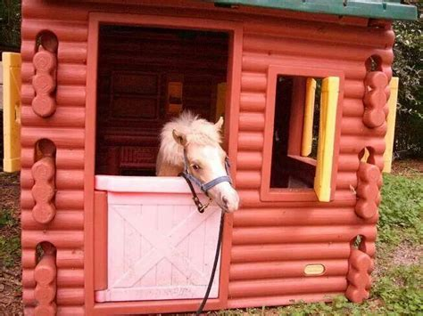 Best 25+ Miniature Horse Barn Ideas On Pinterest