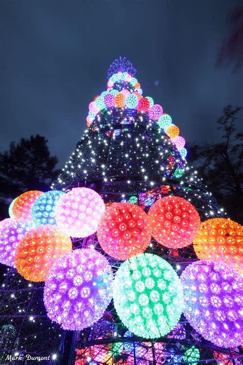 lights festival zoo cincinnati pnc annual 36th november
