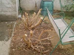 Laurier Rose Entretien : travaux au jardin page 11 ~ Melissatoandfro.com Idées de Décoration