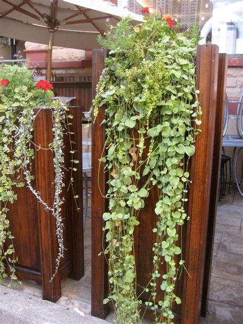 vertical vegetable gardening ideas vertical wall garden