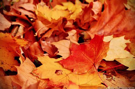 tapis de feuilles mortes feuilles mortes en automne 1 photo paysage le