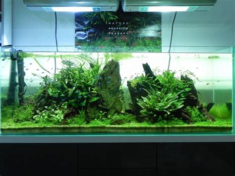 Aquascaping Layouts by 638 Best Aquascaping Images On Fish Aquariums
