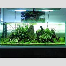 638 Best Aquascaping Images On Pinterest  Fish Aquariums