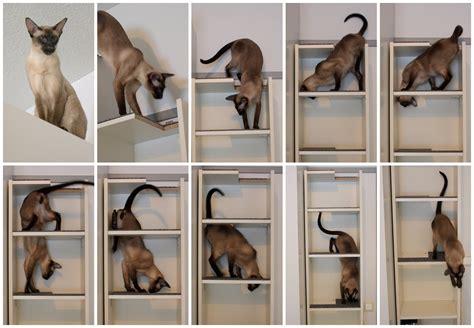 Cat-egorically Best Bookshelf