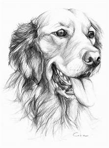 Golden Retriever Pet Portrait Original Pencil by ...