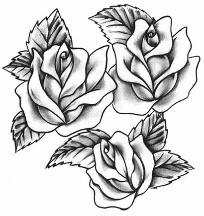 Tattoo Rose Traditional Outline Tattoos Flash Roses