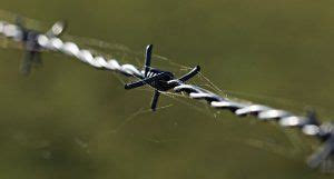barb wire fence cost