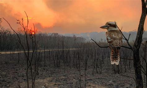 australias devastating bushfires stories wwf