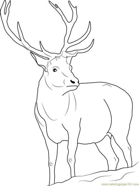realistic reindeer coloring pages  getcoloringscom  printable colorings pages  print