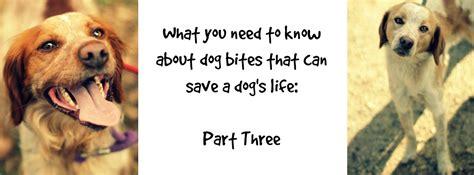 dog bites   save