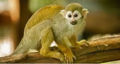 Animals Monkey Squirrel Zoo Santa Teaching College