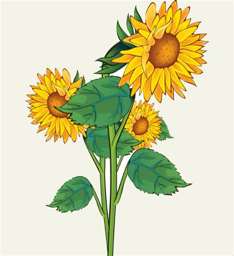 sunflower cliparts  vector eps