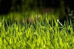 Wann Mäht Man Rasen : rasen neu anlegen aber wann ~ Markanthonyermac.com Haus und Dekorationen