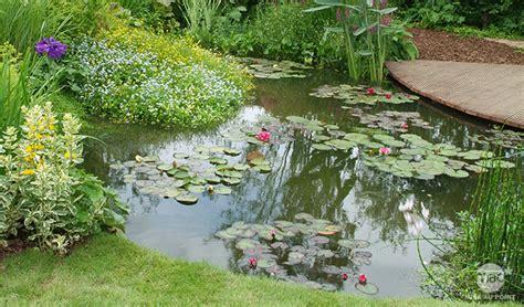Quelles Plantes Aquatiques Dans Votre Bassin