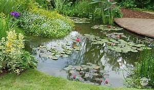 Plante Pour Bassin Extérieur : les plantes aquatiques pour bassin d 39 ornement ~ Premium-room.com Idées de Décoration
