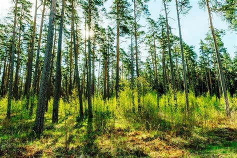 Latvijas valsts meži (LVM) - European State Forest Association