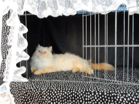 cat show drapes paw print cat show cage curtains show shelter curtains