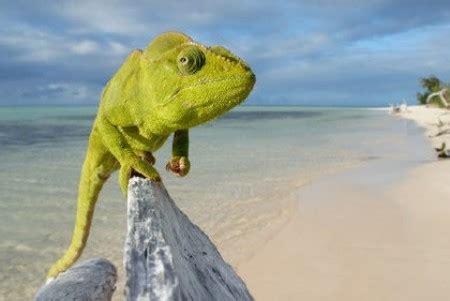 Lucertole Volanti by Madagascar Tutto Cio Bisogna Sapere Sull Isola