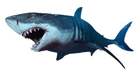 Shark Transparent Png