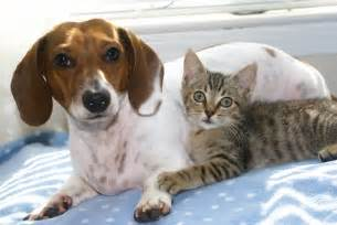 cat friendly hotels pet friendly hotels 187 small animal hospital 187 college of