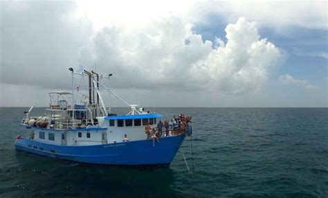 Dolphin Dream Boat Bahamas by Dolphin Dream Budget Diving Liveaboard In Bahamas Excuma