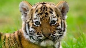 125 Cute Animal... Cute Animals
