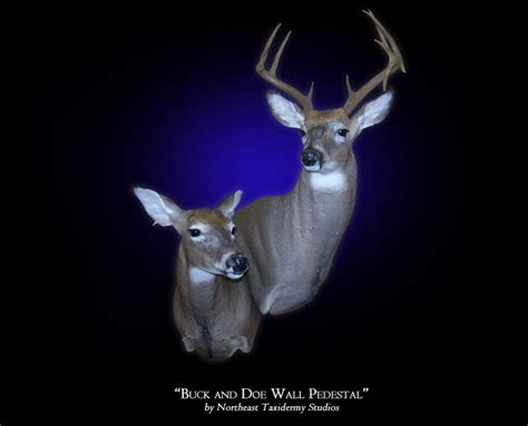 Whitetail Buck And Doe Wall Pedestal Mount, Mounted