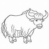 Yak Coloring Pages Cute Illustration Clip Drawing Vector Smiles Outline Illustrations Hand Silhouette Graphic Stands Pic Shutterstock sketch template