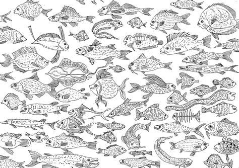 pesce da colorare per bambini pesci 63487 pesci disegni da colorare per adulti