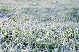 Vermieter Garten Betreten : rasen im winter betreten fast verboten pflege tipps ~ Lizthompson.info Haus und Dekorationen