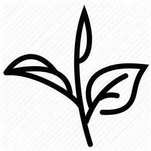 Grow, harvest, herb, leaves, tea, tea leaf, tea leaves ...