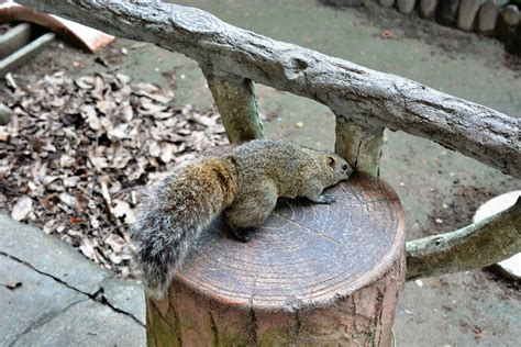 I Went To Squirrel Village A Squirrel S Zoo On Which
