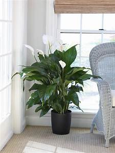 Indoor Plants Low Light | HGTV