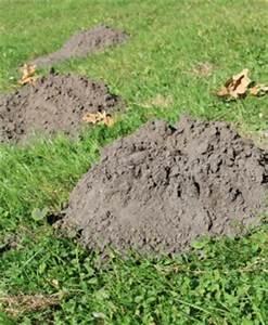 Maulwurf Im Garten Loswerden : wie sie den maulwurf los werden ich weiss ~ Frokenaadalensverden.com Haus und Dekorationen