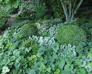 Couvre Sol Vivace : les plantes couvre sol jardin pinterest plantes ~ Premium-room.com Idées de Décoration