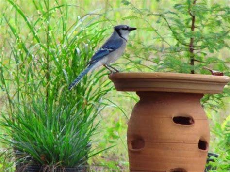 Backyard Bird Habitat by Yard And Garden Secrets Backyard Bird Habitat Plants