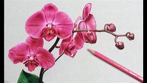 How I Draw Flowers, Orchids Drawing - YouTube