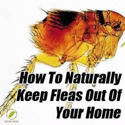 Get Rid Fleas House
