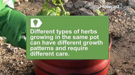 grow   pot indoor herb garden youtube