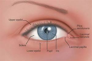 Flashcards Table On The Eye Parts And Definitions