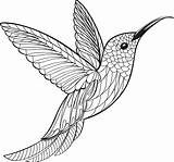 Hummingbird Coloring Vector Pages Drawing Illustration Clip Mandala Gettyimages Easy Animal Graphics Adult Istock Drawings Illustrations Simple Colors Vectors Istockphoto sketch template
