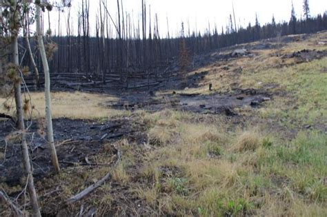 stubborn  slow moving beaver creek fire grew slightly