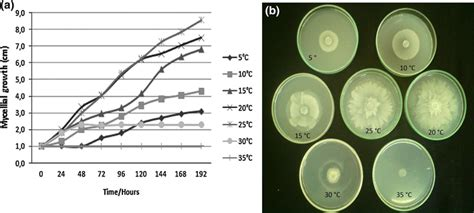 Isolation And Biological Activities Of An Endophytic