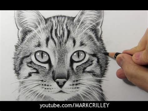 drawing time lapse cat youtube