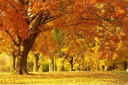 Autumn Oak Trees Fall Tree Landscape Cliff