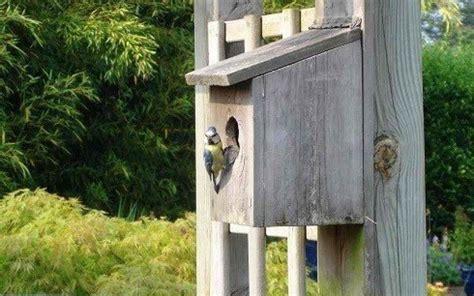 installez une maison pour les oiseaux
