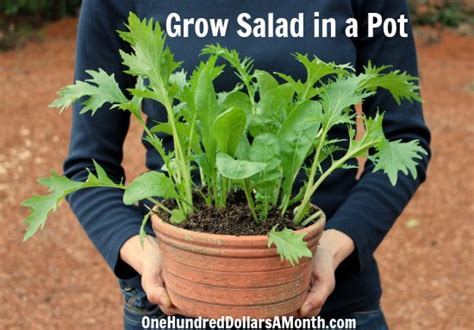 Container Gardening Archives One Hundred Dollars A Month