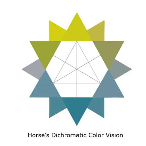 horses vision eyes dichromatic horse completely colorblind colors mostly aren