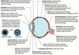 4 0 The Properties Of Light Explain How The Eye And The